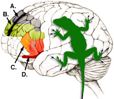 Lizard_Brain